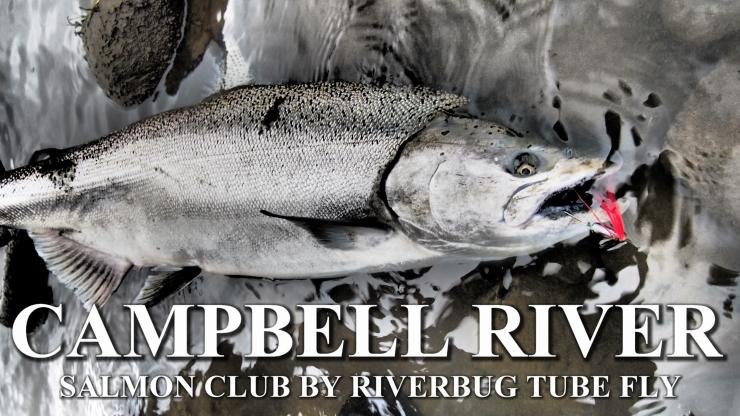 Campbell River in Vancouver Island Canada have been a good testing ground for RiverBug tube fly method. #campbellriver #flytying #tubefly #putkiperhot #perhonsidonta #spinfluga #tubluga #riverbug #lohi #salmon #salmonfishing #finnlures #campbellriversalmon #kuningaslohi #chinook #matkakoski #tornionjoki #saumon #laks #lachs #perhokalastus