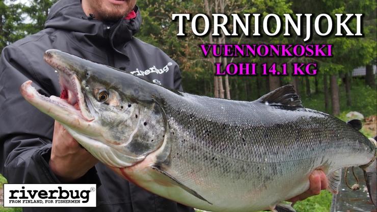 Tornionjoki and Vuennonkoski in Finland / Sweden have been a good testing ground for RiverBug tube fly method. #flytying #tubefly #putkiperhot #perhonsidonta #spinfluga #tubluga #riverbug #lohi #salmon #salmonfishing #finnlures #campbellriversalmon #kuningaslohi #chinook #matkakoski #tornionjoki #saumon #laks #lachs #perhokalastus #visittornio #vuennonkoski